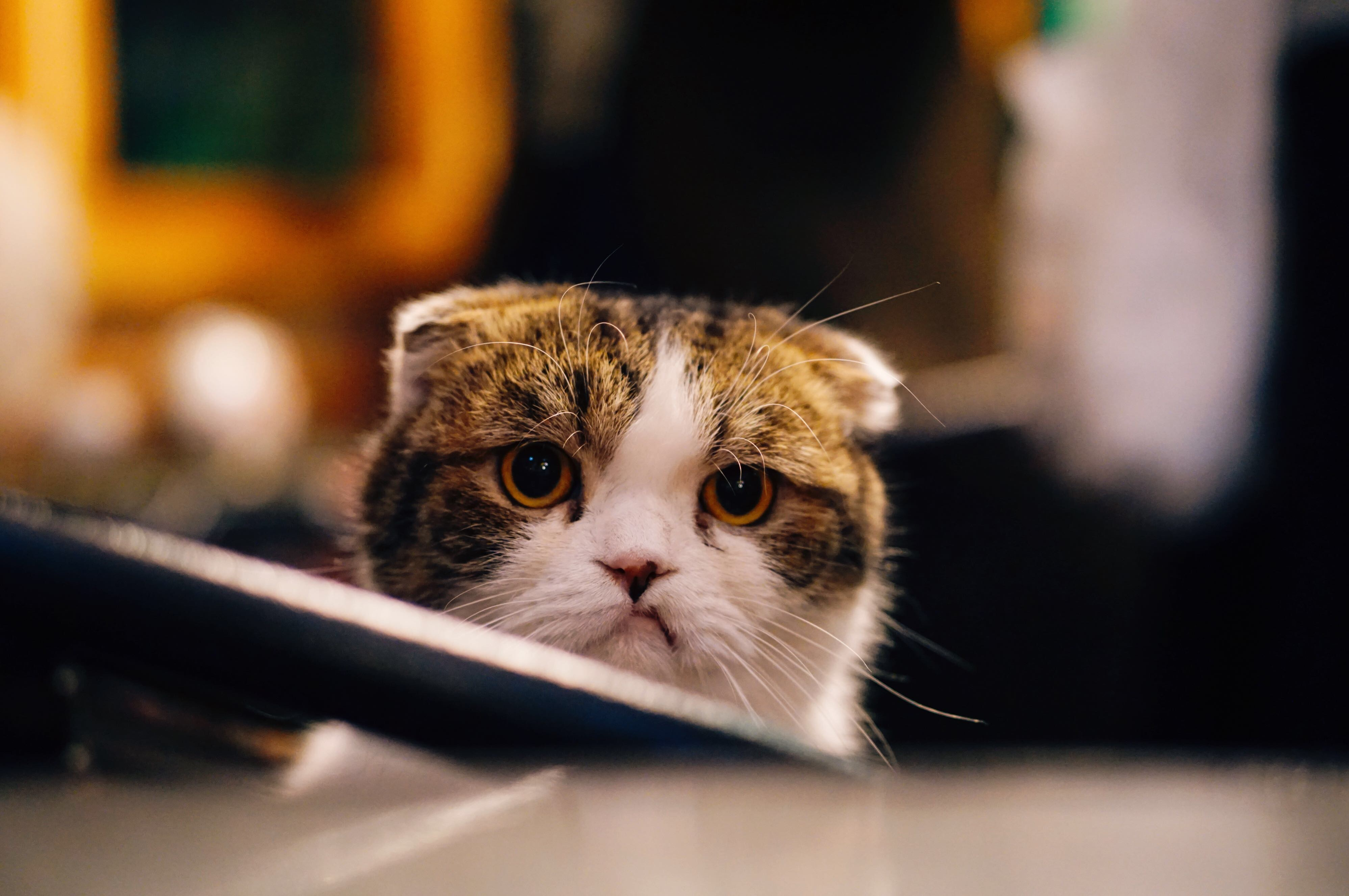 content marketing swindle angry cat