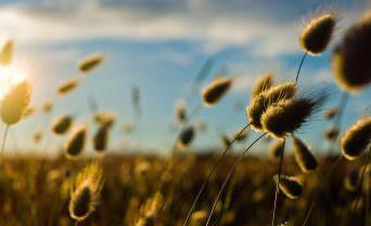 field of flowers swaying in the wind